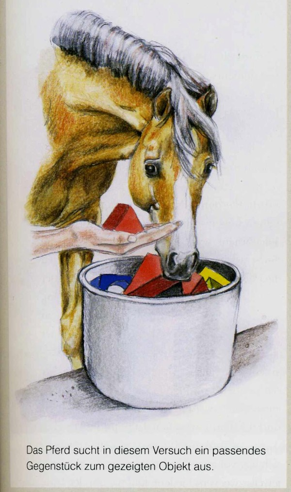 "The horse in this experiment picks the ""pair"" to the object that the trainer show him. From: ""Die Intelligenz der Pferde"" by Marlitt Wendt, Cadmos 2013"