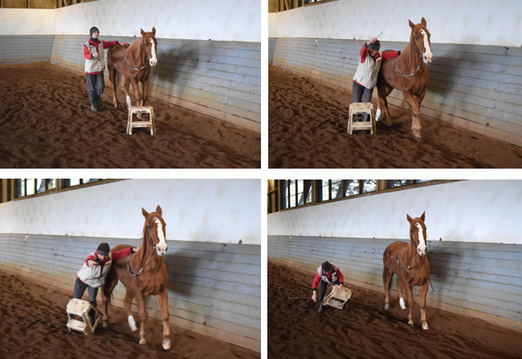 Beau did not connect the experience from last time to this different obstacle. Beau hat das eben gelernte nicht auf ein anderes Hindernis übertragen.