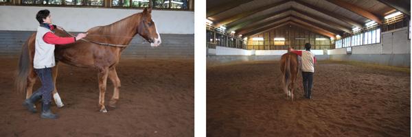 Keeping straight on the centre-line is difficult, as the horse wants to zig-zag. Help with whip or loose rein. Auf der Mittellinie gerade bleiben ist schwer, da das Pferd im Zickzack laufen möchte. Helfen Sie mit Gerte oder am losen Zügel.