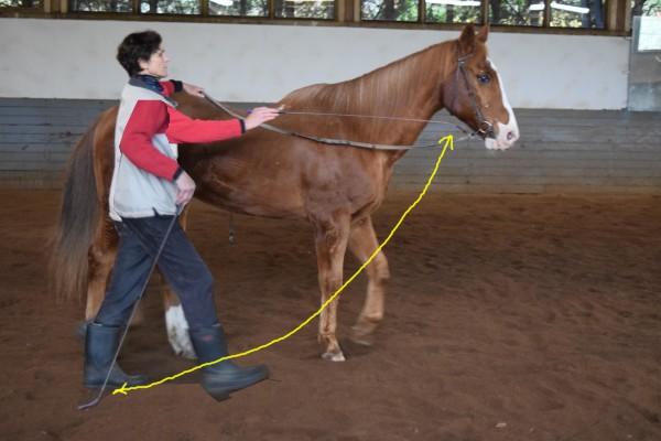 I swing the whip next to his body to keep him straight. Ich schwinge die Gerte neben seinem Körper um ihn gerade zu halten.