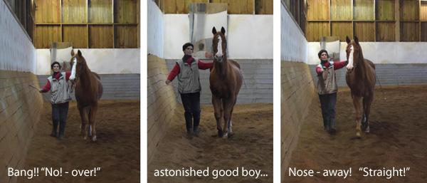 pferd stolpert oft vorne