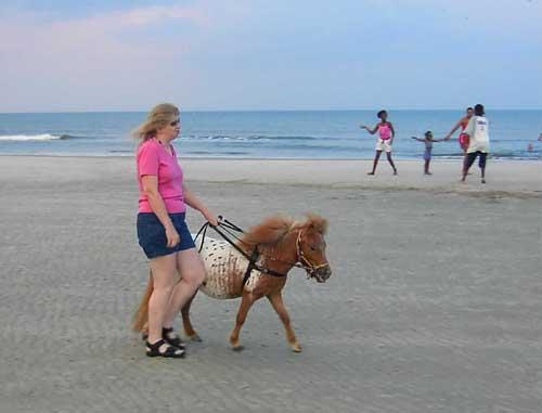 Honestly leaving the decision-making to your horse is a VERY interesting experiment! Die Entscheidungen wirklich seinem Pferd zu überlassen ist ein SEHR interessantes Experiment!