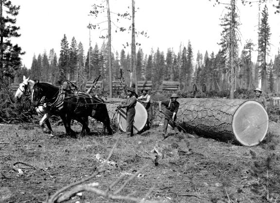 Logging horses work mainly on voice commands. Rückepferde arbeiten hauptsächlich auf Stimmkommandos.