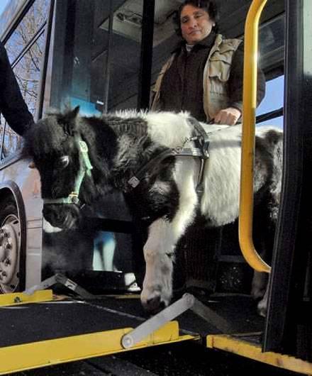Getting on and off the bus via a ramp is easz. In Busse mittels einer Rampe ein- und auszusteigen ist einfach.
