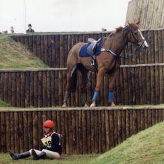 I would say this horse has found a solution! Ich würde sagen, dieses Pferd hat eine Lösung gefunden!