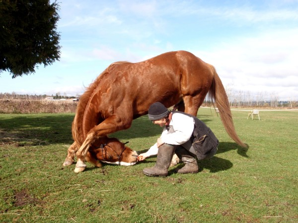 """By """"Shaping"""" you can make any exercise """"fitness improving"""" to your horse. Dirch """"Formen"""" kann man jede Übung """"fitnessverbessernd"""" machen."""