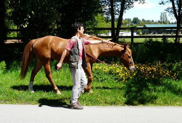 When your horse obeys you on finger signs, your training is on the right track. Wenn Ihr Pferd Ihnen auf Fingerzeig folgt, ist Ihr Training auf dem richtigen Weg.