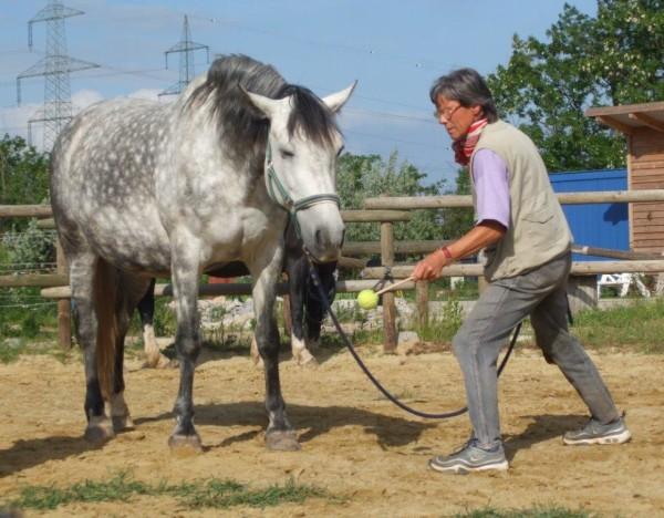 What does this horse try to say to her human? Was versucht diese Stute ihrem Menschen zu sagen?