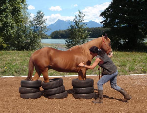 If your horse follows you calmly into such a trap on touching aids, you have reached the goal! Wenn Ihr Pferd Ihnen ruhig auf Touchierhilfen in solch eine Falle folgt, ist das Ziel erreicht!