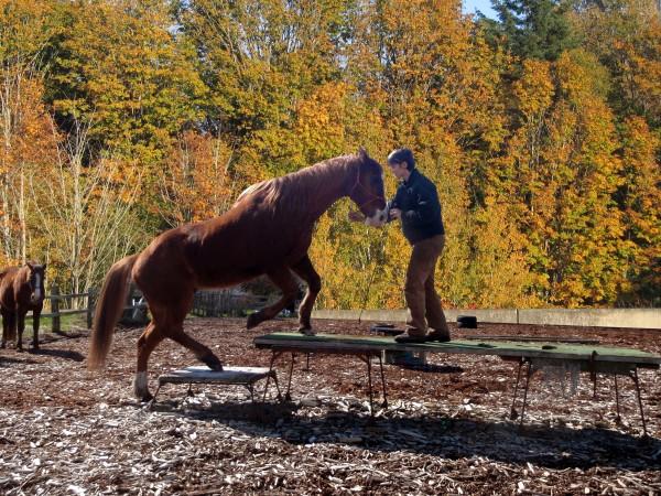 The touching aids tell the horse exactly where to place his feet. Die Touchierhilfen sagen dem Pferd genau, wohin es seine Füße setzen muss.