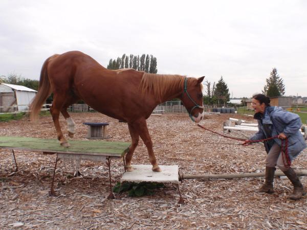 Only when the signals are c-c-c-c- they can be understood by the horse. Nur wenn die Signale k-k-k-k sind, kann das Pferd sie verstehen.