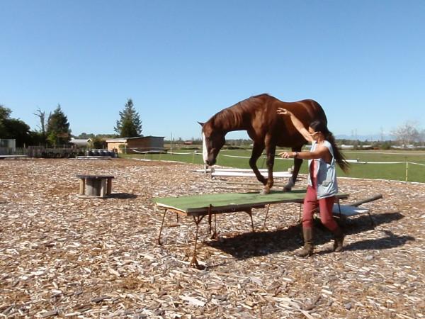 When you train your horse in liberty, he must understand your signals. Wenn Sie Ihr Pferd in Freiheitsdressur erziehen, muss es Ihre Signale verstehen.